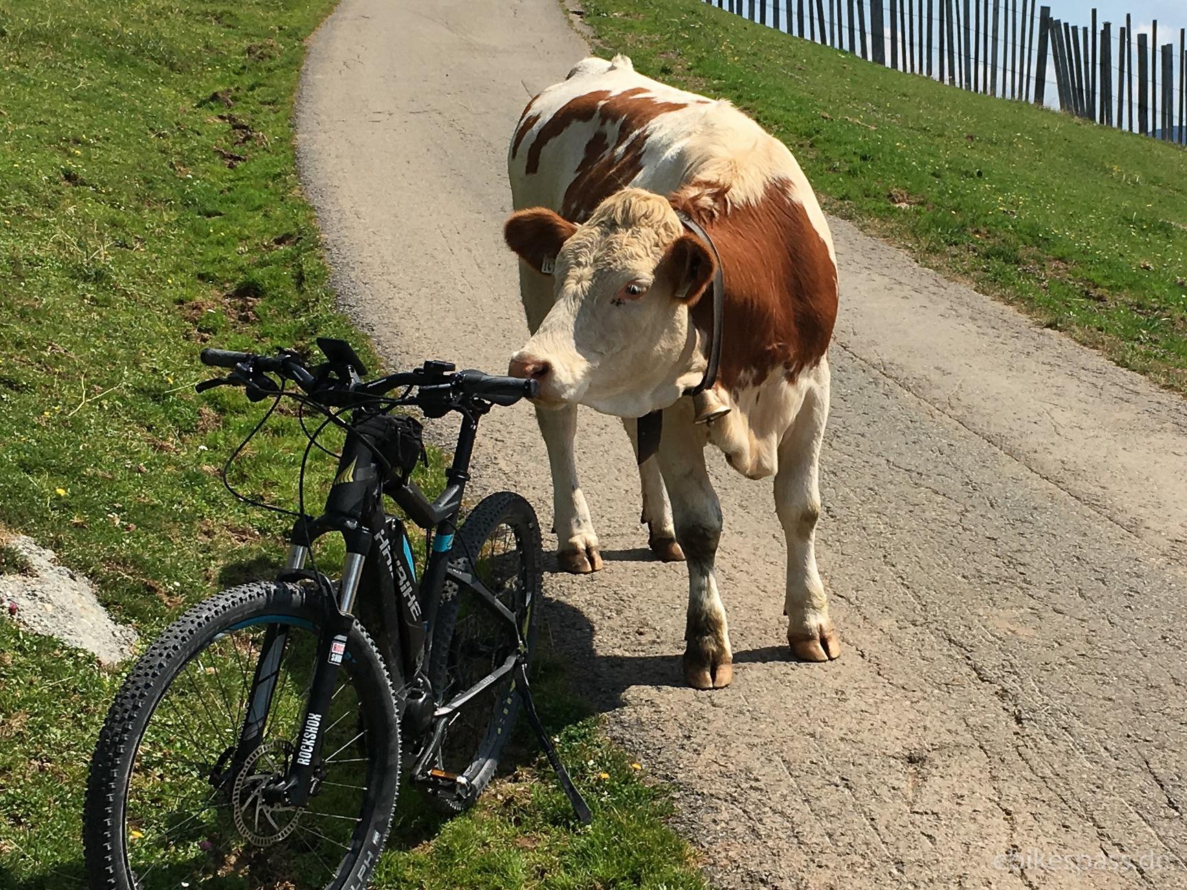 Die Kuh und das E-Bike