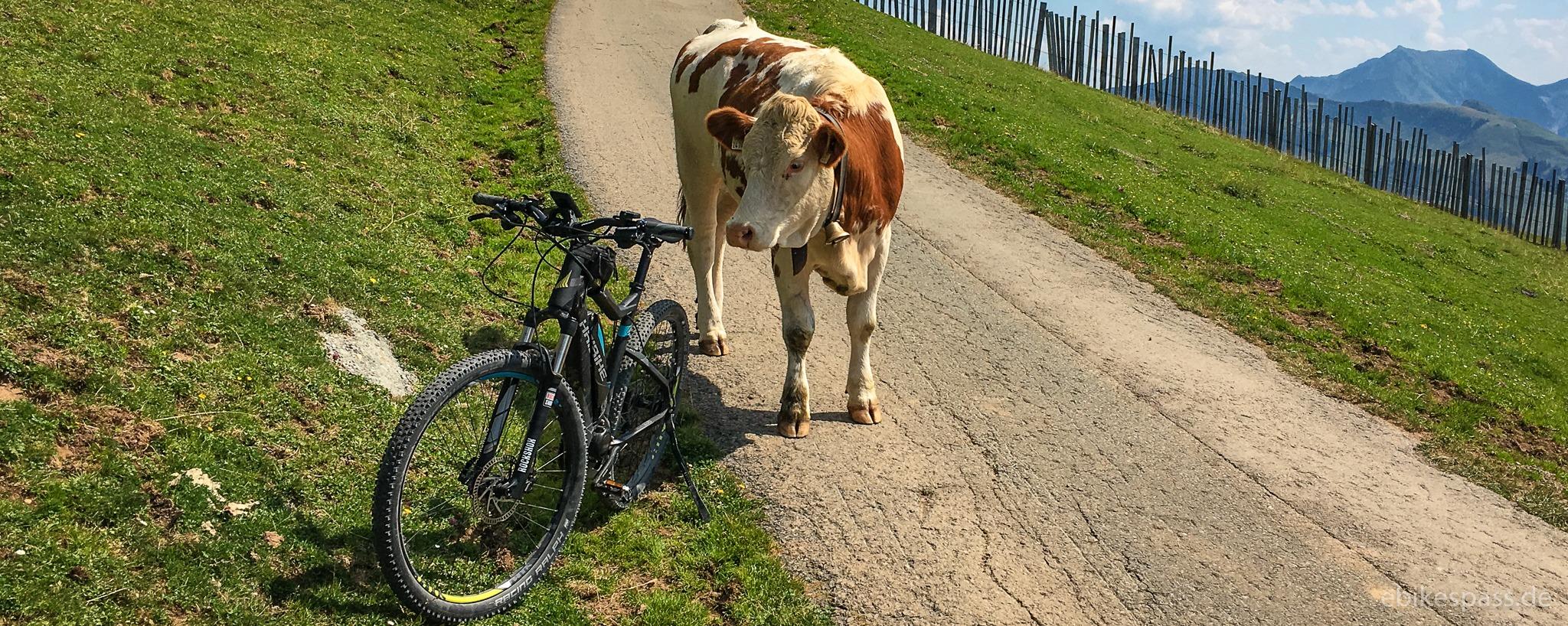 E-Bike und Kuh